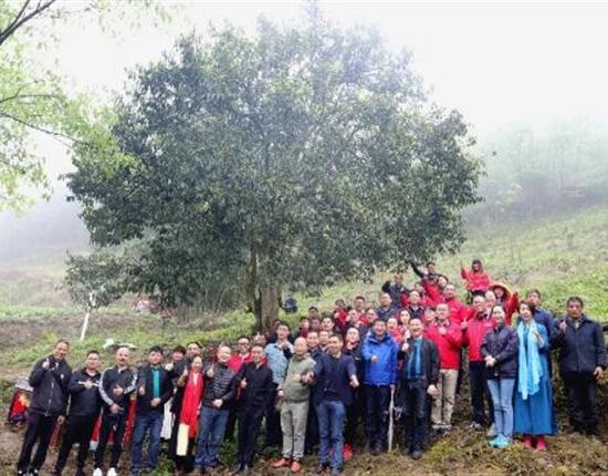 新农业:挂牌保护1700余年树王茶,打造仙源红品牌