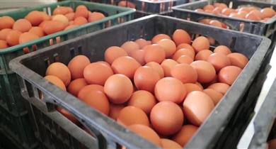 蛋鸡生物发酵饲料